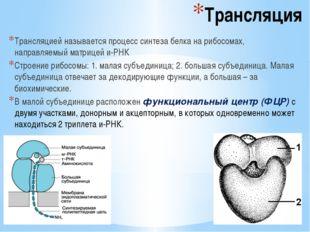Трансляция Трансляцией называется процесс синтеза белка на рибосомах, направл