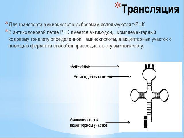 Трансляция Для транспорта аминокислот к рибосомам используются т-РНК В антико...