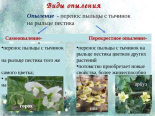 Виды опыления перенос пыльцы с тычинок на рыльце пестика того же самого цветк