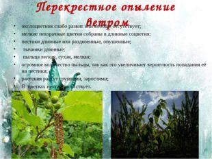 Перекрестное опыление ветром околоцветник слабо развит или вообще отсутствует