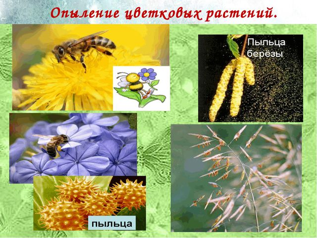 Опыление цветковых растений.