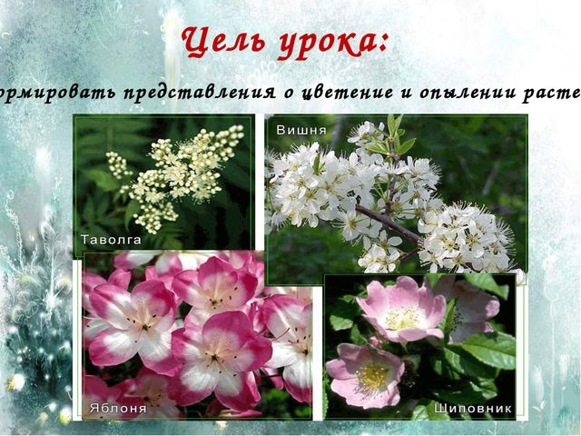 Цель урока: Сформировать представления о цветение и опылении растений.