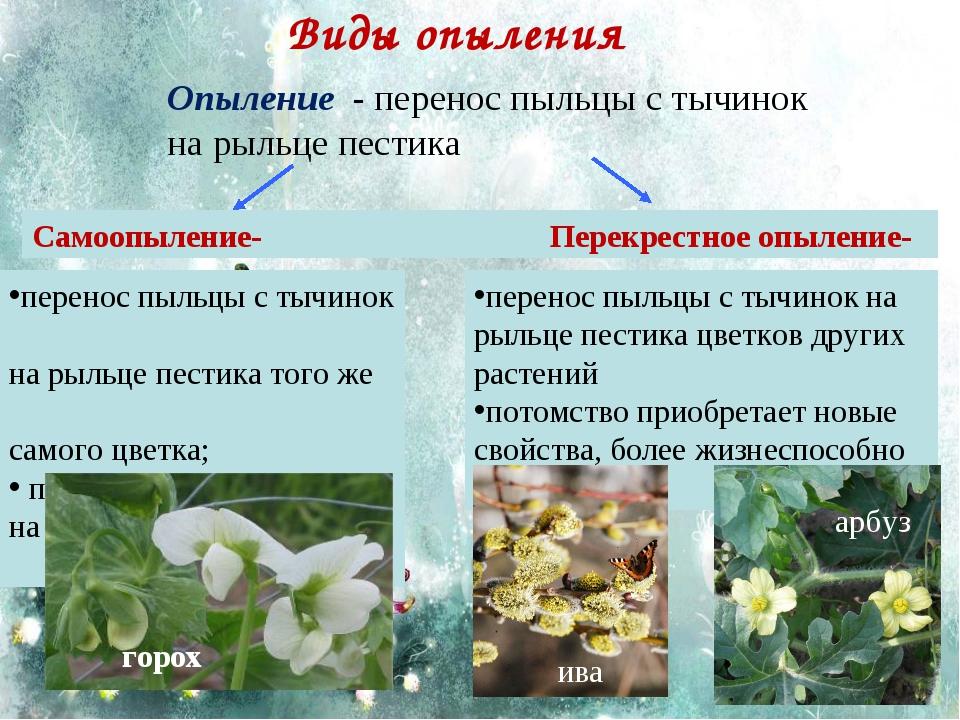 Виды опыления перенос пыльцы с тычинок на рыльце пестика того же самого цветк...