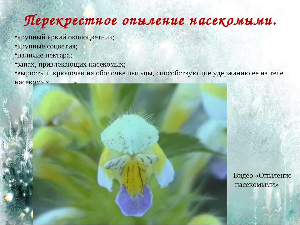 Перекрестное опыление насекомыми. крупный яркий околоцветник; крупные соцвети...