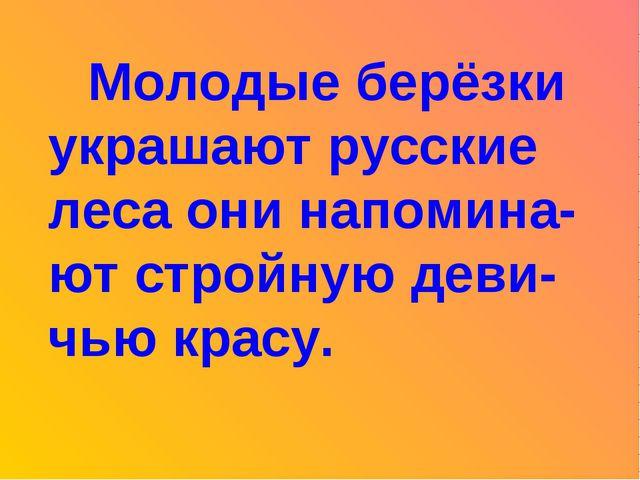 Молодые берёзки украшают русские леса они напомина-ют стройную деви-чью кра...