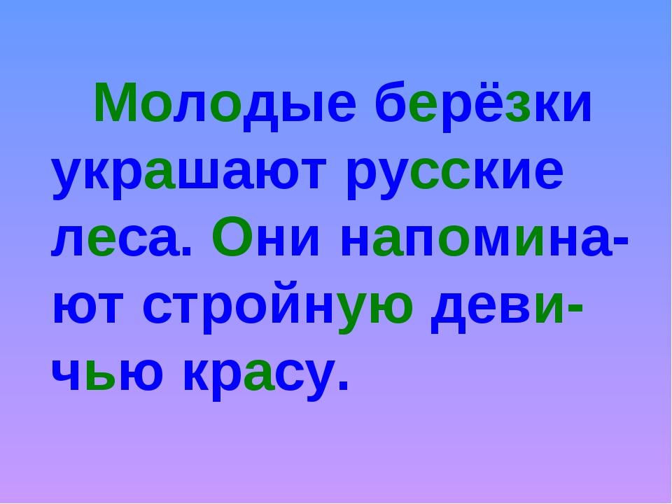 Молодые берёзки украшают русские леса. Они напомина-ют стройную деви-чью кр...