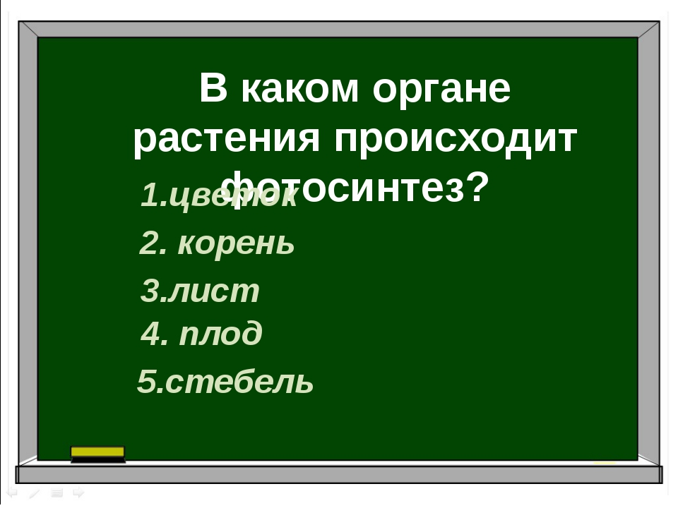 В каком органе растения происходит фотосинтез? 1.цветок 2. корень 3.лист 4. п...