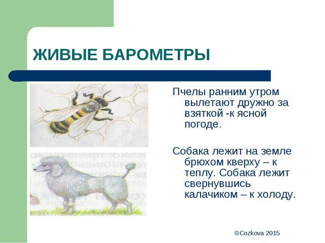 ©Cozkova 2015 ЖИВЫЕ БАРОМЕТРЫ Пчелы ранним утром вылетают дружно за взяткой -...
