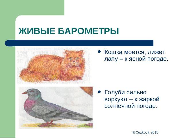 ©Cozkova 2015 ЖИВЫЕ БАРОМЕТРЫ Кошка моется, лижет лапу – к ясной погоде. Голу...