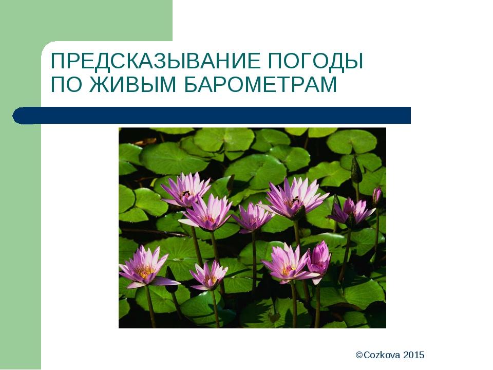 ©Cozkova 2015 ПРЕДСКАЗЫВАНИЕ ПОГОДЫ ПО ЖИВЫМ БАРОМЕТРАМ ©Cozkova 2015