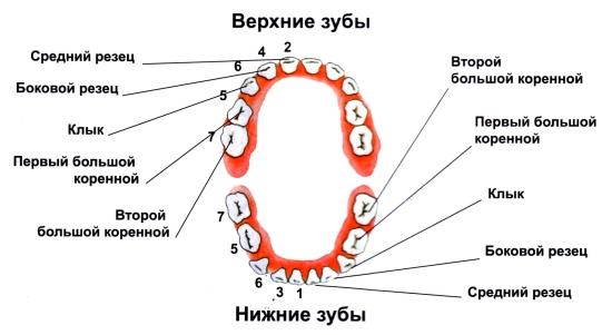 konchayut-vo-vnutr-mnogo-muzhikov