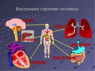 Внутреннее строение человека:
