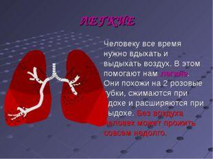 ЛЕГКИЕ Человеку все время нужно вдыхать и выдыхать воздух. В этом помогают на