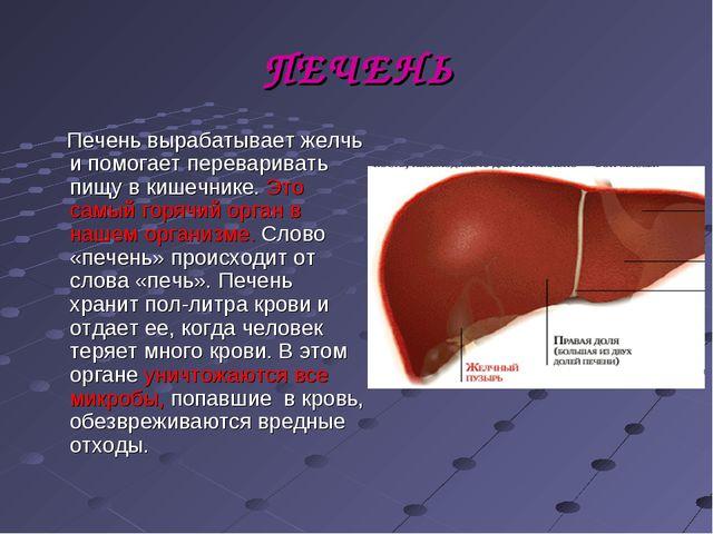 ПЕЧЕНЬ Печень вырабатывает желчь и помогает переваривать пищу в кишечнике. Эт...