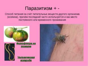 Паразитизм + - Способ питания за счёт питательных веществ другого организма (