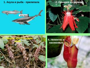1. Акула и рыба - прилипала 2. Орхидея на дереве 3. Петров крест и корни елей
