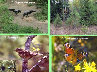 5. Серые вороны 6. Лес 7. Дрозд и полёвка 8. Бабочка и цветок