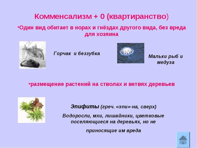 Комменсализм + 0 (квартиранство) Один вид обитает в норах и гнёздах другого в...