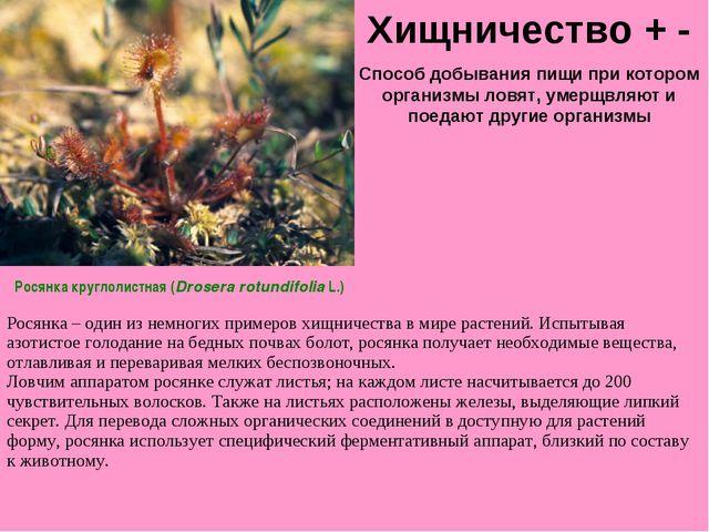 Хищничество + - Способ добывания пищи при котором организмы ловят, умерщвляют...
