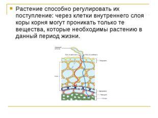 Растение способно регулировать их поступление: через клетки внутреннего слоя