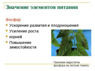 Значение элементов питания Фосфор Ускорение развития и плодоношения Усиление