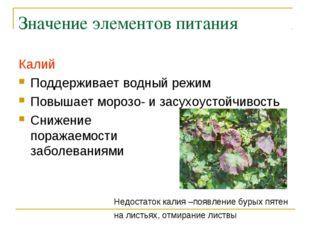 Значение элементов питания Калий Поддерживает водный режим Повышает морозо- и