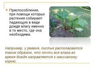 Приспособления, при помощи которых растения собирают падающую в виде дождя в