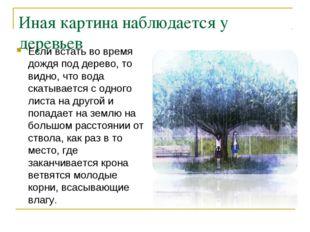 Иная картина наблюдается у деревьев Если встать во время дождя под дерево, то
