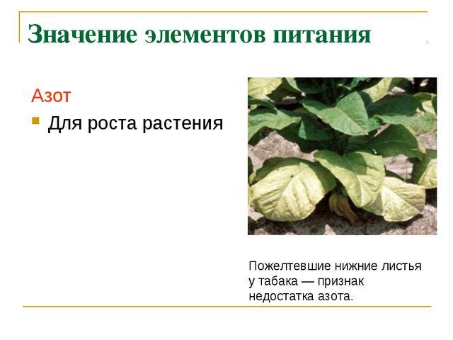 Значение элементов питания Азот Для роста растения Пожелтевшие нижние листья...