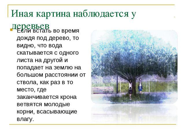 Иная картина наблюдается у деревьев Если встать во время дождя под дерево, то...