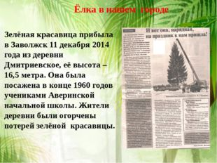 Ёлка в нашем городе Зелёная красавица прибыла в Заволжск 11 декабря 2014 год