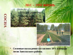 Сосновые насаждения составляют 10% площади лесов Заволжского района. ЛЕС – ЭТ