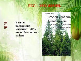 Еловые насаждения занимают – 30% лесов Заволжского района ЛЕС – ЭТО ЖИЗНЬ ЕЛЬ