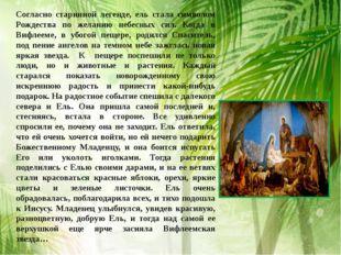 Согласно старинной легенде, ель стала символом Рождества по желанию небесных