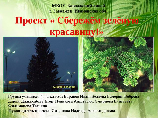 Проект « Сбережём зелёную красавицу!» МКОУ Заволжский лицей г. Заволжск Ивано...