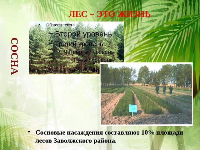 Сосновые насаждения составляют 10% площади лесов Заволжского района. ЛЕС – ЭТ...