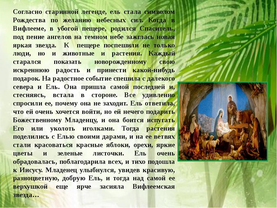 Согласно старинной легенде, ель стала символом Рождества по желанию небесных...