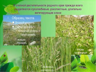 В степной растительности родного края прежде всего выделяются сухолюбивые, уз