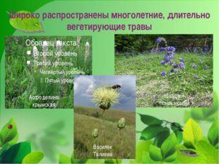 Широко распространены многолетние, длительно вегетирующие травы Асфоделина кр