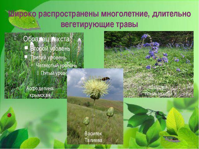 Широко распространены многолетние, длительно вегетирующие травы Асфоделина кр...