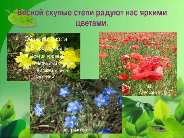 Весной скупые степи радуют нас яркими цветами. Адонис весенний Мак самосейка...