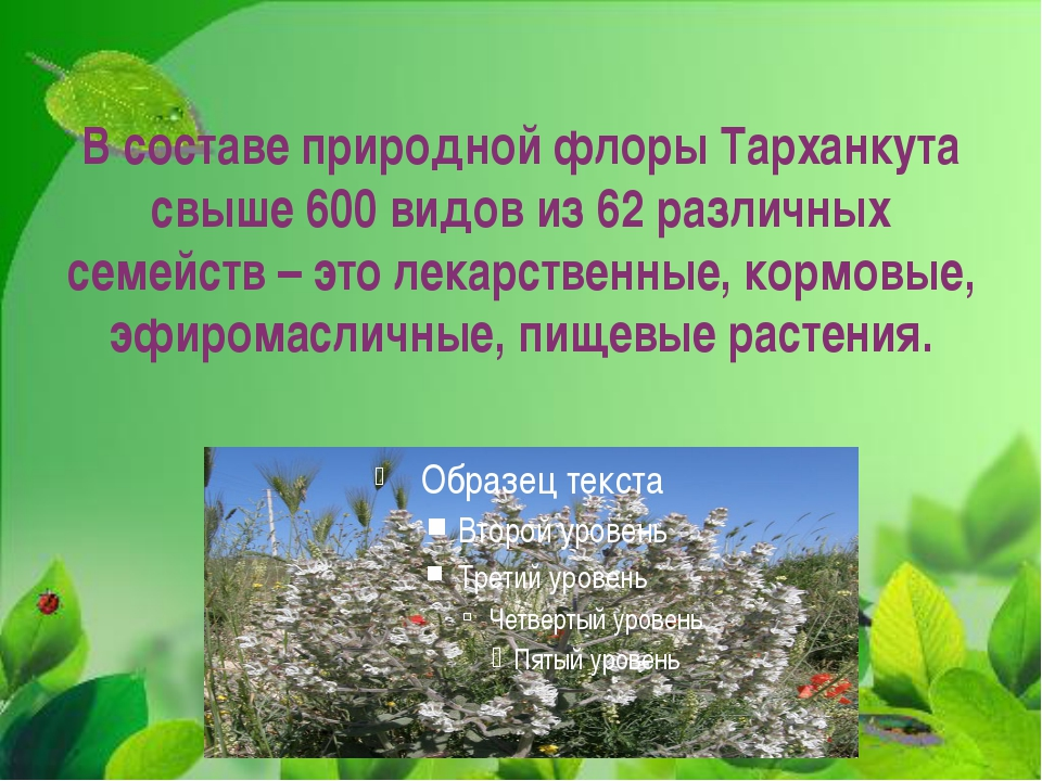 В составе природной флоры Тарханкута свыше 600 видов из 62 различных семейств...