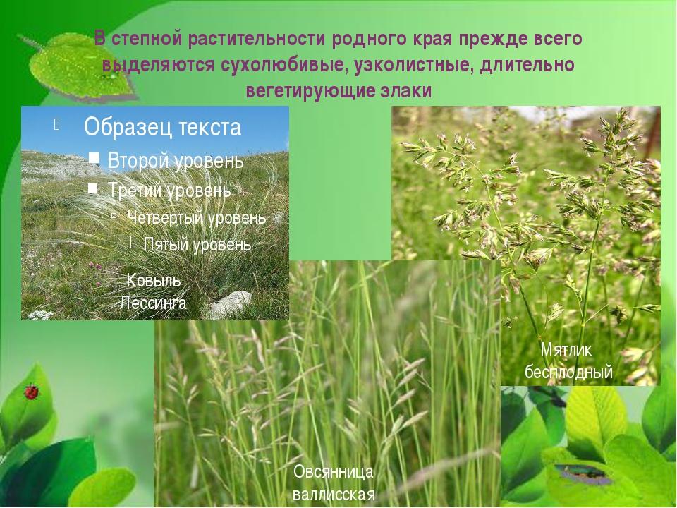 В степной растительности родного края прежде всего выделяются сухолюбивые, уз...