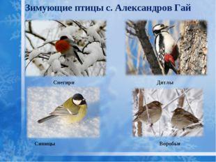 Зимующие птицы с. Александров Гай Синицы Дятлы Снегири Воробьи