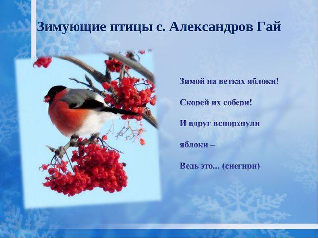 Зимующие птицы с. Александров Гай