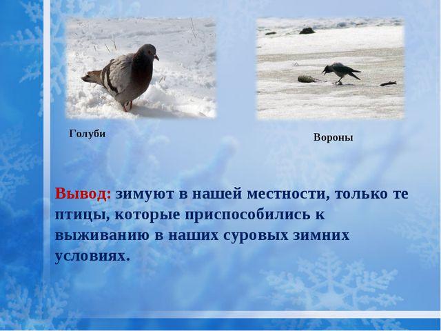 Голуби Вывод: зимуют в нашей местности, только те птицы, которые приспособили...