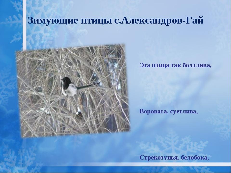 Зимующие птицы с.Александров-Гай Эта птица так болтлива, Воровата, суетлива,...