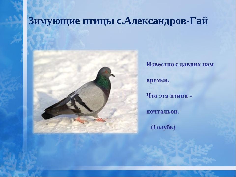 Зимующие птицы с.Александров-Гай