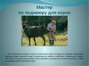 Мастер по педикюру для коров Это специалисты которые следят за копытами у кор