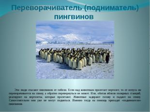Переворачиватель (подниматель) пингвинов Эти люди спасают пингвинов от гибели